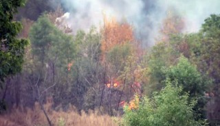 Morning Fog Slows a Brush Fire in the Hansen Dam Recreation Area