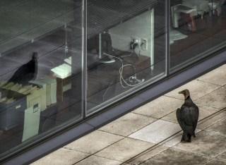 San Francisco to Tally Bird-Into-Window Death Toll