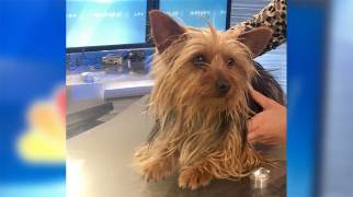 Pet of the Week: Sinead