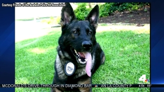 Police Dog Recovering After Surgery