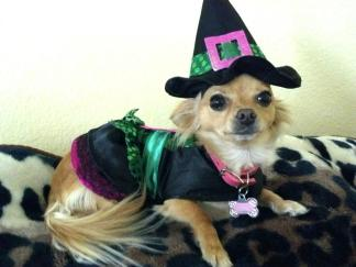 Your Pets' Halloween Costumes