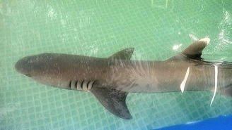 Shark Dies After Commercial Shoot in Backyard Pool