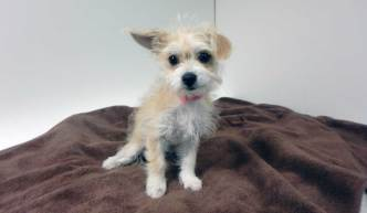 Pet of the Week: Bitsy