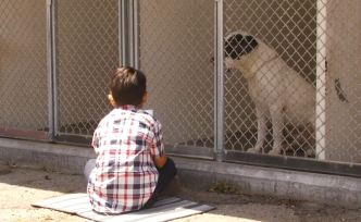 Boy Brightens Dog's Days With Story Time