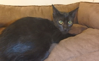 Pet of the Week: Midnight