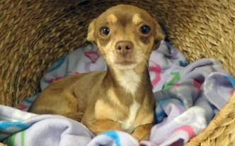 Pet of the Week: Mimi