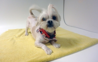 Pet of the Week: Peaches