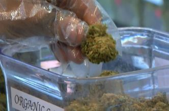 Marijuana Legalization Effort Moves Forward