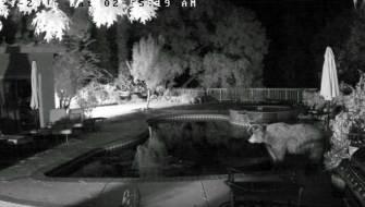 Watch: Chill Bear Soaks in Backyard Hot Tub