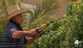 Robbers Target South LA Gardeners