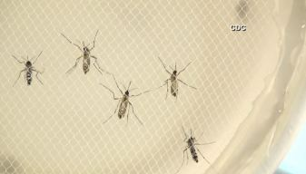 Mosquito Vigilance Urged in SoCal as Zika Spreads