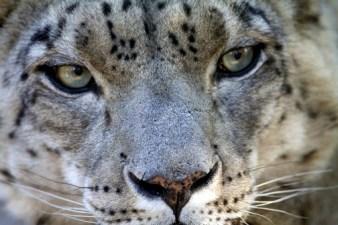 Moonridge Animal Park Photo Day