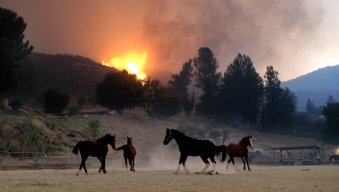 ASPCA Helping Animals and Owners Affected by Woolsey Fire