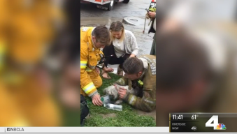 Firefighters Bring Pup Back to Life