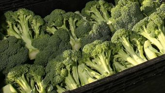 America's Favorite Vegetable? Broccoli, Survey Finds