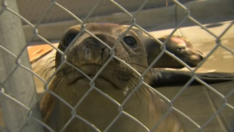 Seals and Sea Lions Exit Rehab and Go Back to the Sea
