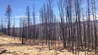 Forest Service Plans to Let Some Blazes Burn