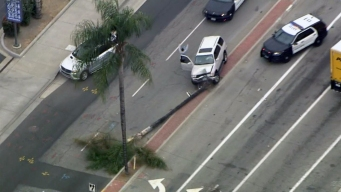 Palm Tree Stops Driver in High-Speed Pursuit
