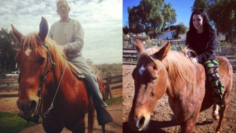 2 Pit Bulls Accused of Mauling Horse Still Not Located