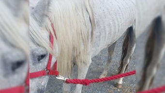 Authorities Looking for Owner of Abused, Abandoned Horse