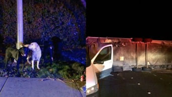 Dogs Rescued After Rollover Crash in Alameda County