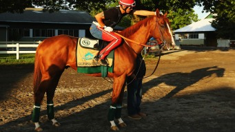 California Chrome Visits Starting Gate