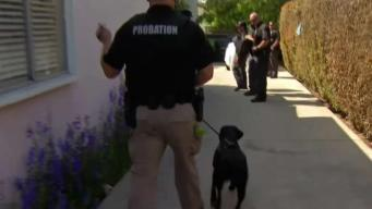 4 Our Heroes: Probation K-9s Sniff Out Drugs and More