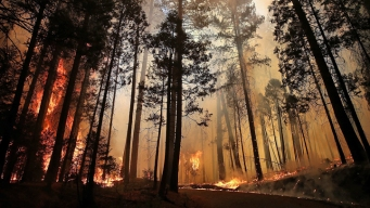 Rim Fire Surpasses 224,000 Acres, 4th Largest in Calif. History