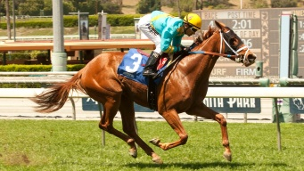 Jockey Hurt in Santa Anita Race Accident