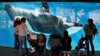 Former SeaWorld Manager Used Fake Company to Embezzle Funds