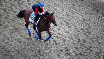 What We Learned From American Pharoah's Preakness Win