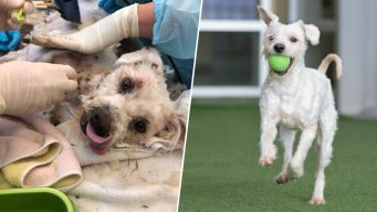 Stray Dog 'Struggling to Survive' Saved, Ready for Adoption