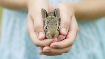 3 Fla. Teens Charged With Throwing Bunny Against Wall