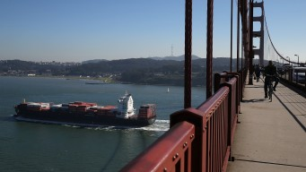 Shipping Companies Praised for Slowing Down for Whales