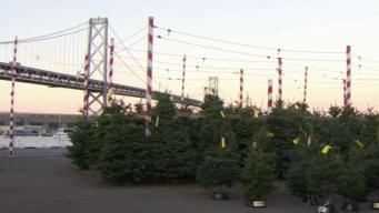 Bay Area Farmers Face Christmas Tree Crunch