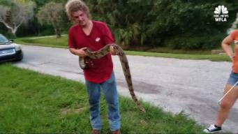 Man Hears Noises For Years, Finds Boa Constrictor in Attic