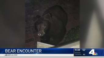 Caught on Camera: Early Morning Bear Encounter