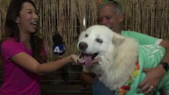 Clear the Shelters: It's Time to Meet This Fun-Loving and Adorable Husky