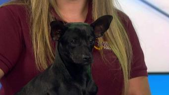 Clear the Shelters: Ziggy Is Up for Adoption