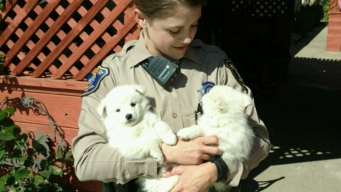 Sheriff's Deputies Apprehend Adorable Perpetrators: Puppies