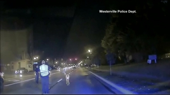 Police Help Deer Caught In Headlights