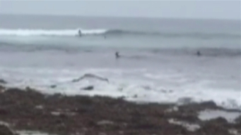 Deer Interrupts Surfing Tryouts in Dana Point