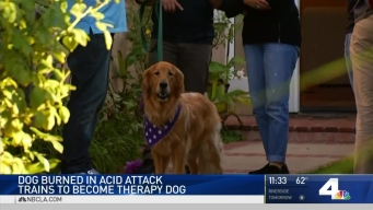 Dog Burned in Acid Attack Trains to Become Therapy Dog