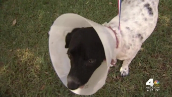 'Dog Gone' Success in Irvine for Clear the Shelters
