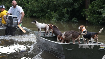 Dogs Left Homeless in Louisiana Flooding to Find New Homes in San Diego