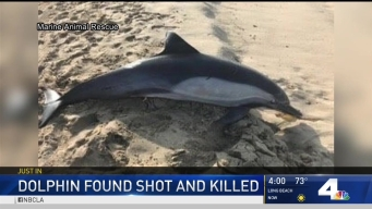Dolphin Discovered Shot to Death in Manhattan Beach