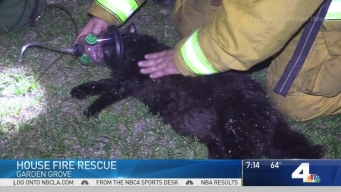 Firefighters Save Cat in Garden Grove Fire