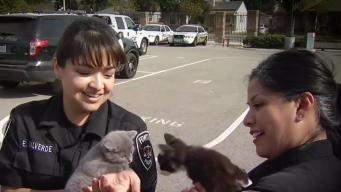 Fontana Police Dept. Rescues Abused Animals