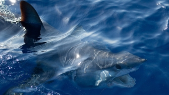 Extinction Bites: Countries Agree to Protect Sharks and Rays