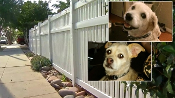 San Diego Man Sentenced for Poisoning Neighbors' Dogs